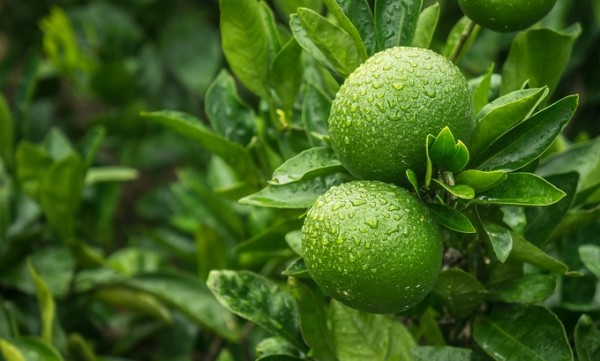 'Cómo comer mandarina, hacer azul mandarina'